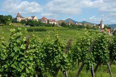 Zellenberg - #Alsace