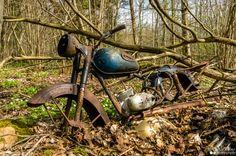 Metsaleid - Forest find