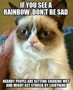Most Funny Quotes : QUOTATION – Image : Quotes Of the day – Life Quote Grumpy cat funny, grumpy cat meme …For more grumpy cat humor visit www.bestfunnyjoke… Sharing is Caring Grumpy Cats, Grumpy Meme, Cats Meowing, Funny Quotes, Hilarious Memes, Grumpy Quotes, Funny Humor, Funny Pics, Funny Images