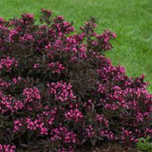 10 Great Shrubs To Use In Your Landscape! | Proven Winners