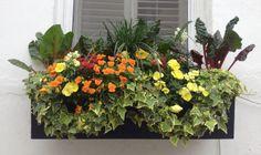 Charleston Style Gardens   Charleston Window Box 8 via The Gracious Posse