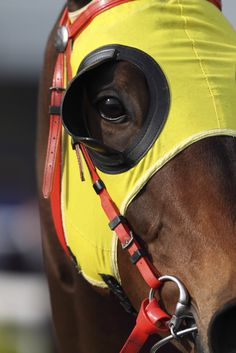 you know you're looking at a winner  blinkers :)