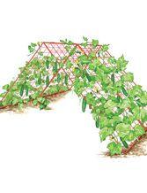 34 besten garten gurken pflanzen bilder auf pinterest gartengem se g rtnern und anbau von. Black Bedroom Furniture Sets. Home Design Ideas