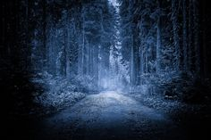 In the forest | Discovered from Dream Afar New Tab
