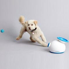 Automatic Ball Launcher #$50-$100 #For-Pets