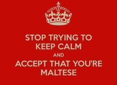 Keep calm? I'm Maltese! Malta Valletta, Keep Calm Carry On, Malta Island, Maltese Dogs, Little Island, Dog Love, Fun Facts, Homeland, Life Quotes