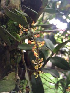 #garden #orchid