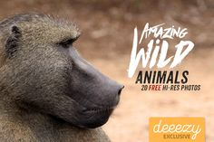 20 Amazing Wild Animals – Deeezy – Freebies with Extended License