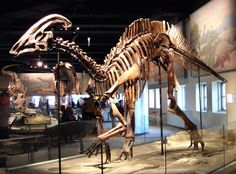 Parasaurolophus cyrtocristatus - Field Museum of Natural History - Wikipedia, the free encyclopedia