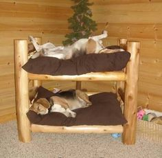Double decker pet bed, so cute