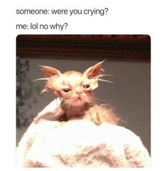 21 Painfully Relatable Memes That& Make You Feel Seen - Memebase - Funny M.,Funny, Funny Categories Fuunyy 21 Painfully Relatable Memes That& Make You Feel Seen - Memebase - Funny Memes Source by 9gag Funny, Crazy Funny Memes, Really Funny Memes, Stupid Funny Memes, Funny Laugh, Funny Relatable Memes, Very Funny Pics, Super Funny, Funny Stuff