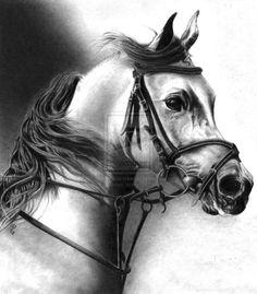 pencil drawings | Pencil Drawings Of Animals
