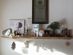 nature table/shelf