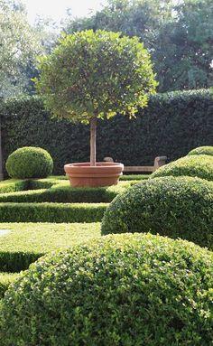 Boxwood Garden topiary form and texture Boxwood Garden, Topiary Garden, Boxwood Topiary, Potted Garden, Topiary Trees, Potted Trees, Garden Pots, Formal Gardens, Outdoor Gardens