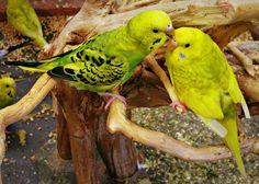 Love Birds - Jon Lander - copyright 2013 - nature photography, birds