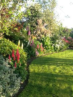 Summer in my garden. Garden Borders, Gardening, Plants, Summer, Summer Time, Lawn And Garden, Plant, Planets, Horticulture