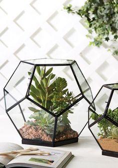 Geodesic Terrariums - Set of 2