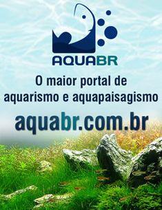 Portal AQUABR Filtro Canister, Betta, Acara Disco, Aquarium Filter, Portal, Filters, Animals, Camping Survival, Fish Tanks
