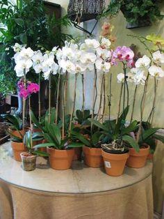 inside plants
