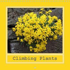 Climbing Plants - CALVENDO calendar - http://www.calvendo.co.uk/galerie/climbing-plants/ - #plants #flowers #calvendo #calendar