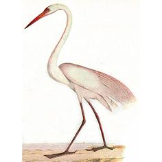 """A White Heron"" Summary, Analysis, and Lesson Plans 