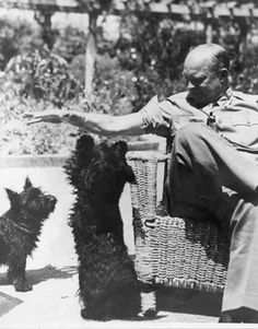 Eisenhower with his Scottish Terriers in Algeria in 1943.