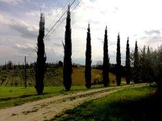 San Donato in Poggio - Photo by Bianca Corti