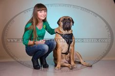 http://all-about-bullmastiff-dog-breed.com/ #bullmastiff #dog #girl #photography