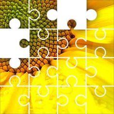 Sunflower Corner Jigsaw Puzzle, 67 Piece Classic. A sunflower in detail, yellow, orange, green, petals, organic natural
