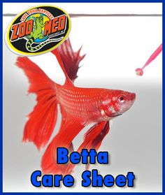 How to make a self sustaining aquarium pets pet for Betta fish care sheet