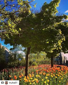 Amsterdam? Nope. Dette er #Oslo . #reiseliv #reisetips #reiseblogger #reiseråd  #Repost @truhell1 (@get_repost)  Oslo #oslo #oslove #oslolove #oslogram #oslobilder