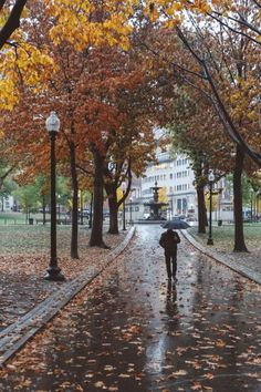 Taking my own photographs of Boston to expose the charming, historical, and epic city she really is Rainy Night, Rainy Days, Autumn Scenes, Autumn Aesthetic, Swan Lake, Summer Beauty, Time Of The Year, Fall Season, Wonderful Time