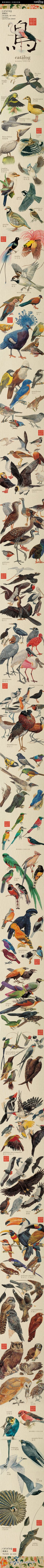 The Birds by DEA Picture Library ♥  #Illustration #Birds