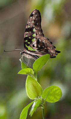 Butterfly ~ By Camilla Korsnes Photography