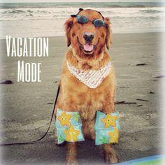 Vacation mode - yup