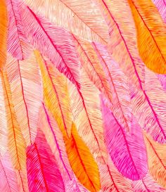 pink orange Feather print