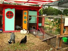 Goats and chickens together!