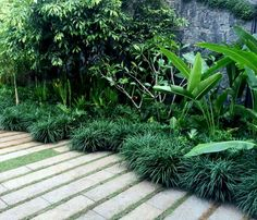 33 Fabulous Tropical Garden Design Ideas That You Definitely Like - Tropical garden design has become one of the most popular forms of garden design in recent years. Not only is it different, it also makes your garden . Small Tropical Gardens, Tropical Garden Design, Tropical Backyard, Tropical Landscaping, Modern Landscaping, Outdoor Landscaping, Tropical Plants, Outdoor Gardens, Landscaping Ideas