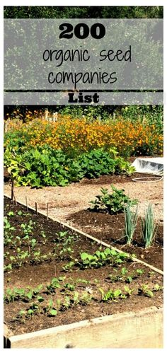 Are you inspired to eat healthier food and feel better?  Choose what kind of garden you would like to plant: an apothecary garden, green smoothie garden, salsa garden, herbal tea garden. This list of 200 organic seed companies will inspire you to get going and plant your garden! Better Living through healthy choices. Herboloy and Herbal Use/Education.
