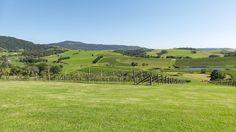 winery wedding, destination wedding, views of vineyard, great for wedding photography, NSW South Coast, Gerringong