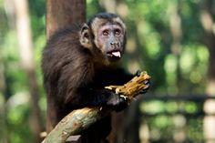 Tour a Tarapoto - Reserva de animales http://www.tourstierraverde.com/tour-tarapoto/
