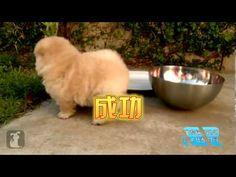 狗狗搞笑篇 - YouTube