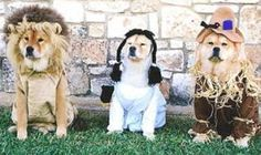 Wizard of Oz #dog #halloween #ecard #free #furallover / : wizard of oz dog costume  - Germanpascual.Com