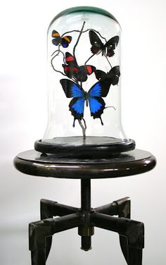 Stunning butterfly domes from Auckland based sculptor Lisa Black have just arrived in store via KOKO Classics