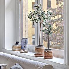@ourwork #industri #interior #interiör #staging #styling #fullstyling #vasastan #olivträd #fönster #window #vitt #interior4all #interior125 #interiordesign #vintage #sekelskifteslägenhet #tillsalu #husmanhagberg_goteborg