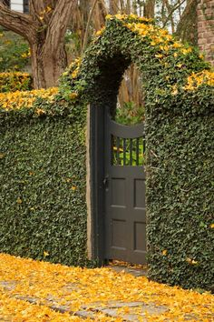 Ivy-covered black gate - Under fall's spell and a new contest - The Enchanted Home