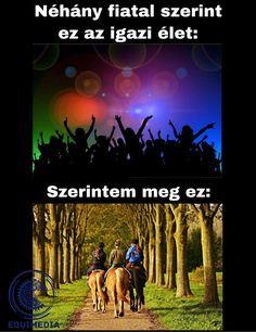 My Horse, Horses, Emoji, My Dream, My Life, Random, Videos, Cute, Movie Posters