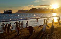 Penguins at dawn, Salisbury Plain, South Georgia & the South Sandwich Islands (© National Geographic Image Collection/Alamy)