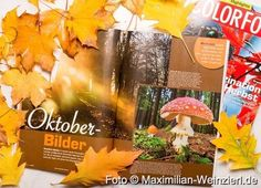 Maximilian Weinzierl – Fotografie – Blog: Herbst ist's, mach was draus !