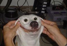 Dog pics funny (15 pics)-3